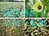 欧易隆10P热泵高温果蔬烘干设备 黄秋葵烘干机